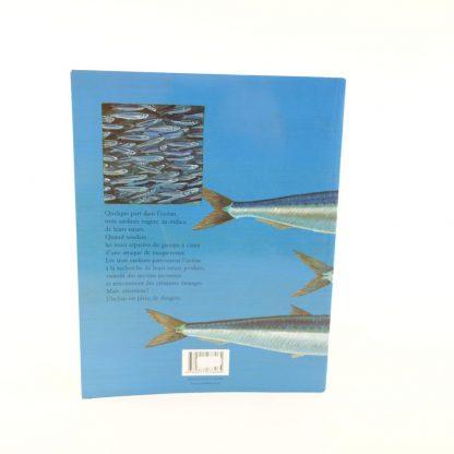 comme-des-sardines-1